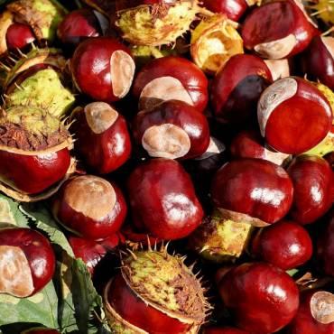 La castaña, un fruto seco con muy pocas calorías